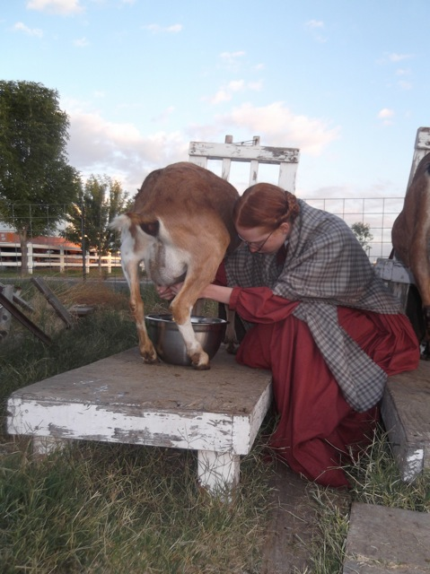 Milking a goat in 1860 civil war dress and shawl