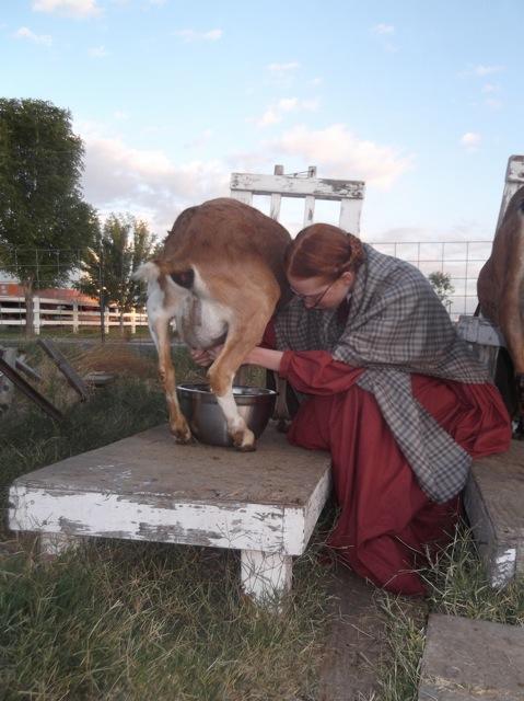 Milking a goat in 1860 civil war dress and shawl